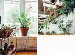 uo guide hip houseplants urban outfitters blog