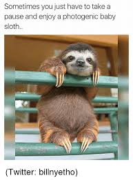 Funny Sloths Memes - sometimes you just have to take a pause and enjoy a photogenic