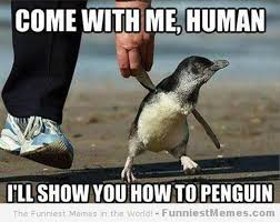 Funny Animals Meme - 24 memes that prove penguins are the funniest animals on earth