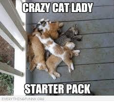 Crazy Wolf Meme - do we have any homework starter pack starter packs meme on me me