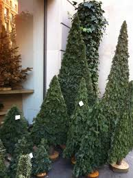 Christmas Trees In Paris Mr And Mrs In Paris Manicured Christmas Trees And Renunculus