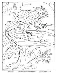desert lizard coloring page lizard coloring pages desert lizard coloring pages spider man lizard