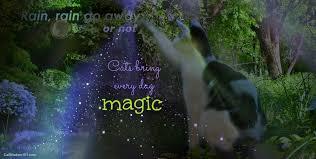 quotes magic cats monday cat wisdom 101
