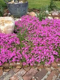 perennial plants for winter u0026 spring perennial flowers