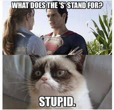 What Does Meme Stand For - what does the s stand for funny cat meme