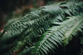 green fern leaves free image peakpx