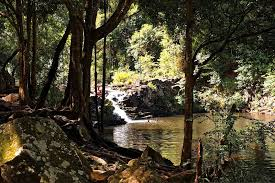 Gardeners Falls Maleny - waterfalls and swimming holes walks and parks in and around