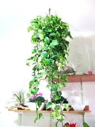 live indoor plants live indoor plants grass live house plants for sale builtwithlove site
