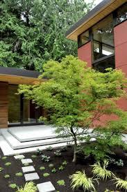 modele jardin contemporain érable du japon dans le jardin en 55 idées d u0027aménagement