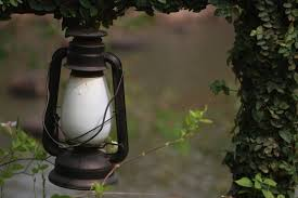 free images tree water outdoor branch light plant vintage
