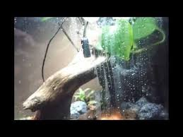 10 gallon vertical terrarium with mistking misting youtube