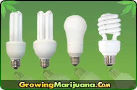 download fluorescent light for growing solidaria garden