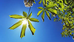 where does the energy for photosynthesis originate reference