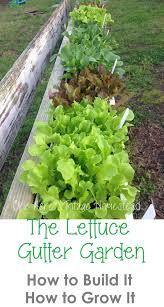 gardening tips 105 best container gardening images on pinterest garden ideas