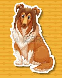 us afghan hound afghan hound stock photos royalty free afghan hound images and