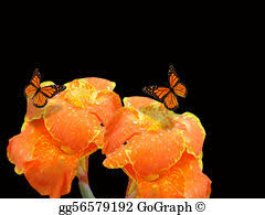 stock illustration monarch butterflies and canna clip