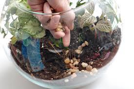 terrific terrarium indoor gardening project for kids