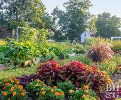 Best Type Of Mulch For Vegetable Garden - vegetable gardens that look great