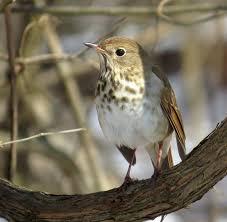 octoraro delaware backyard birding challenge delmarva ornithological society