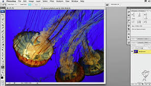 tutorial photoshop cs3 videos working with the count tool free adobe photoshop cs3 video