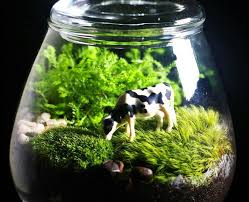 10 best plants for closed terrariums plantdecors