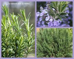 comment utiliser le romarin en cuisine le romarin dans la cuisine herbes aromatiques suite le