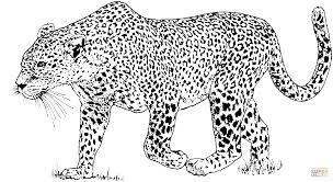 leopard 6 coloring page free printable coloring pages