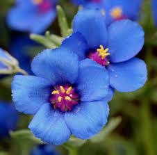 imagenes flores bellisimas bellisimas flores para regalar imagenes de rosas blancas