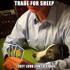 Settlers Of Catan Meme - my dog likes to help my dad play settlers of catan adviceanimals