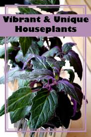 247 best happy house plants images on pinterest indoor plants