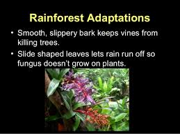 Tropical Rainforest Plant List - plant adaptations