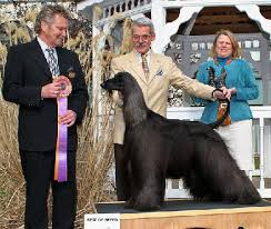 afghan hound judith light nahc 2006 specialty results