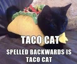 Kittens Memes - 27 kitten memes quoteshumor com