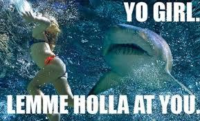 Shark Week Meme - blog hey armen