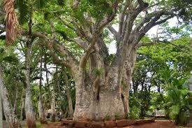 Botanical Garden Internship Mauritius National Botanical Garden Plemousse