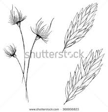 seamless background sketch ear wheat by stock vector 365040506