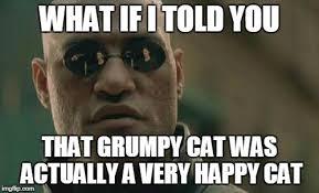 Morpheus Cat Meme - matrix morpheus meme imgflip