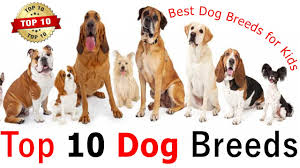 top 10 breeds for family what of should you get
