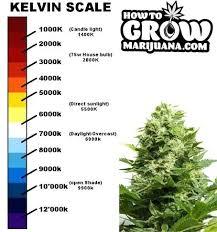 best light for weed seedlings best light for growing plants indoors best price l high pressure