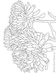 coloring pages animal patterns google coloring