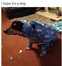 Christmas Dog Meme - 41 funny christmas photos for ho ho holiday laughs team jimmy joe