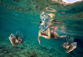 North Dakota Snorkeling images Best snorkelling spots in the south pacific goway jpg