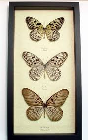 butterfly gifts frame idea rice paper butterfly set real butterfly gifts real
