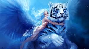 white tiger wallpaper qygjxz