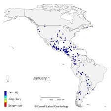 a map of mesmerizing migration 118 bird species migrate across a map