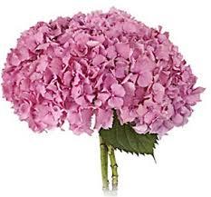pink hydrangea online wholesale bulk cut hydrangea pink