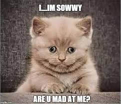 Sad Kitten Meme - cute kitty imgflip