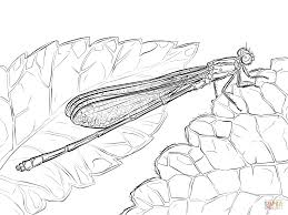 dragonfly coloring pages free coloring pages
