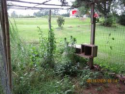 run pen advice need advice on predator proofing backyard chickens