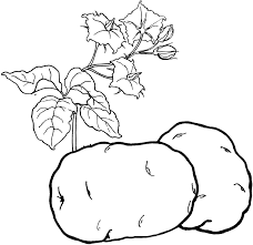 vegetables coloring pages 5 vegetables kids printables